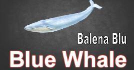 balena blu